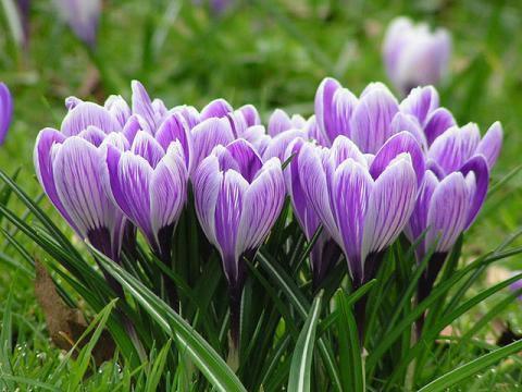 OBRÁZEK : jarni_kvetiny.jpg