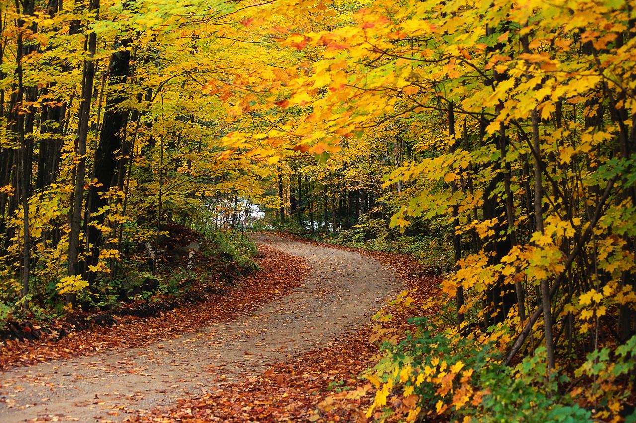 OBRÁZEK : podzim.jpg
